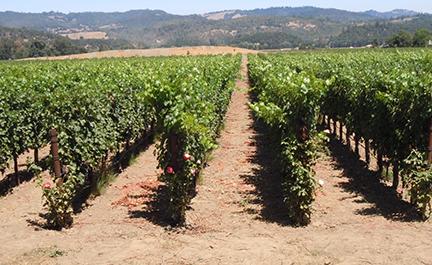 Wine, Wine, & More Wine