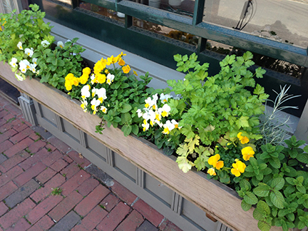 Flower Boxes On Petticoat Row